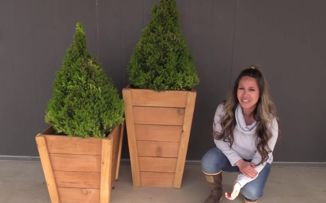 Build your own Tall Wood Planters